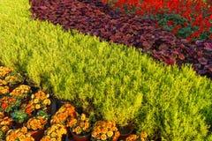 Floral ουράνιο τόξο του χρώματος Στοκ εικόνα με δικαίωμα ελεύθερης χρήσης