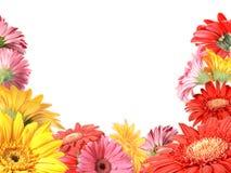floral πλαίσιο λουλουδιών ετερόκλητο Στοκ Φωτογραφία