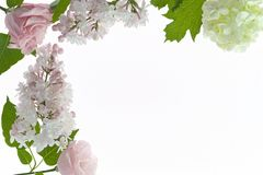 Floral πλαίσιο με άσπρος και χλωμός - ρόδινα λουλούδια που απομονώνονται στο λευκό Στοκ φωτογραφία με δικαίωμα ελεύθερης χρήσης