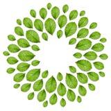 Floral πλαίσιο που γίνεται από τα φρέσκα πράσινα φύλλα Τοπ άποψη, δημιουργικό σχεδιάγραμμα Στοκ Εικόνες