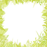 floral πλαίσιο πράσινο Στοκ Φωτογραφία
