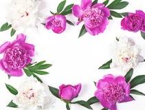 Floral πλαίσιο φιαγμένο από ρόδινα και άσπρα peony λουλούδια και φύλλα που απομονώνονται στο άσπρο υπόβαθρο Επίπεδος βάλτε Στοκ εικόνες με δικαίωμα ελεύθερης χρήσης