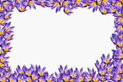 floral πλαίσιο Στοκ εικόνες με δικαίωμα ελεύθερης χρήσης