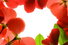 floral πλαίσιο Στοκ φωτογραφία με δικαίωμα ελεύθερης χρήσης