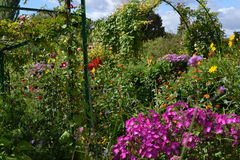 Floral ποικιλία στοκ εικόνες με δικαίωμα ελεύθερης χρήσης