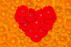 floral πορτοκάλι gerberas ανασκόπηση&sigm Στοκ φωτογραφία με δικαίωμα ελεύθερης χρήσης