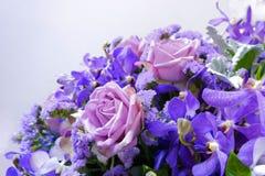 floral πορφυρός Στοκ Εικόνα