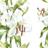 floral πρότυπο άνευ ραφής Άσπροι κρίνοι Watercolor, συρμένη χέρι βοτανική απεικόνιση των λουλουδιών Στοκ Φωτογραφίες