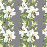 floral πρότυπο άνευ ραφής Άσπροι κρίνοι Watercolor, συρμένη χέρι βοτανική απεικόνιση των λουλουδιών Στοκ Εικόνα