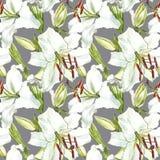 floral πρότυπο άνευ ραφής Άσπροι κρίνοι Watercolor, συρμένη χέρι βοτανική απεικόνιση των λουλουδιών Στοκ Εικόνες