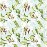floral πρότυπο άνευ ραφής Άσπροι κρίνοι Watercolor, συρμένη χέρι βοτανική απεικόνιση των λουλουδιών Στοκ φωτογραφία με δικαίωμα ελεύθερης χρήσης