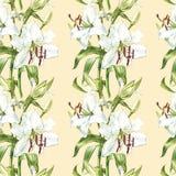floral πρότυπο άνευ ραφής Άσπροι κρίνοι Watercolor, συρμένη χέρι βοτανική απεικόνιση των λουλουδιών Στοκ Φωτογραφία