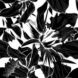 floral πρότυπο άνευ ραφής Γραπτό υπόβαθρο λουλουδιών Flor Στοκ Φωτογραφία