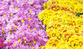 floral πρότυπο καρδιών λουλουδιών απελευθέρωσης πεταλούδων κίτρινο Υπόβαθρο από τα διάφορα λουλούδια Στοκ Εικόνα