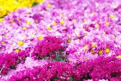 floral πρότυπο καρδιών λουλουδιών απελευθέρωσης πεταλούδων κίτρινο Υπόβαθρο από τα διάφορα λουλούδια Στοκ εικόνα με δικαίωμα ελεύθερης χρήσης
