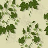 floral πρότυπο λυκίσκου άνευ ραφής Στοκ Φωτογραφίες