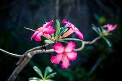 floral πρότυπο τροπικό Εξωτικά φύλλα και λουλούδια Κήπος του Μπαλί Ινδονησία Στοκ Φωτογραφία