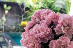 floral πρότυπο τροπικό Εξωτικά φύλλα και λουλούδια Κήπος του Μπαλί Ινδονησία Στοκ φωτογραφία με δικαίωμα ελεύθερης χρήσης