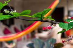 floral πρότυπο τροπικό Εξωτικά φύλλα και λουλούδια Κήπος του Μπαλί Ινδονησία Στοκ Εικόνα