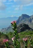 floral πόλη βασίλειων ακρωτηρί&omega Στοκ Εικόνα
