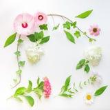 Floral πλαίσιο με τα λουλούδια κισσών, hibiscus και hydrangea Τοπ όψη Στοκ εικόνα με δικαίωμα ελεύθερης χρήσης