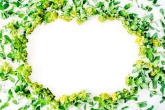 Floral πλαίσιο στεφανιών με τα κίτρινα wildflowers και τα πράσινα φύλλα στο άσπρο υπόβαθρο στοκ φωτογραφία