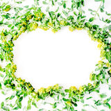 Floral πλαίσιο στεφανιών με τα κίτρινα wildflowers και τα πράσινα φύλλα στο άσπρο υπόβαθρο στοκ εικόνα με δικαίωμα ελεύθερης χρήσης