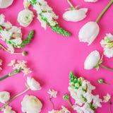 Floral πλαίσιο σχεδίων των άσπρων λουλουδιών και των οφθαλμών στο ροζ Επίπεδος βάλτε, τοπ άποψη λεπτομερές ανασκόπηση floral διάν Στοκ Εικόνες