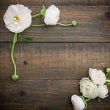 Floral πλαίσιο του άσπρου βατραχίου στο ξύλινο υπόβαθρο Επίπεδος βάλτε, τοπ άποψη floral πρότυπο καρδιών λουλουδιών απελευθέρωσης Στοκ Εικόνες