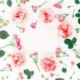 Floral πλαίσιο των ροζ τριαντάφυλλων, των οφθαλμών και της κάρτας στο άσπρο υπόβαθρο Επίπεδος βάλτε, τοπ άποψη λεπτομερές ανασκόπ Στοκ Φωτογραφία