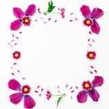Floral πλαίσιο των ρόδινων πετάλων και των λουλουδιών που απομονώνονται στο άσπρο υπόβαθρο Επίπεδος βάλτε, τοπ άποψη όπως η ανασκ στοκ εικόνες