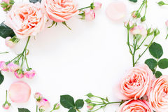 Floral πλαίσιο των peony τριαντάφυλλων, των οφθαλμών και των φύλλων στο άσπρο υπόβαθρο Επίπεδος βάλτε, τοπ άποψη λεπτομερές ανασκ Στοκ Εικόνες