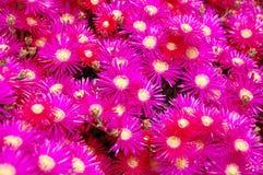 floral ροζ ανασκόπησης Στοκ εικόνα με δικαίωμα ελεύθερης χρήσης