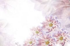 Floral ρόδινος-άσπρος-ιώδες όμορφο υπόβαθρο convolvulus σύνθεσης ανασκόπησης λευκό τουλιπών λουλουδιών Ευχετήρια κάρτα για τις δι Στοκ φωτογραφία με δικαίωμα ελεύθερης χρήσης