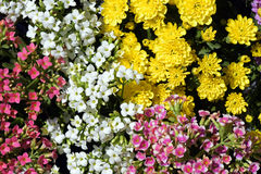 Floral ρύθμιση για τη διακόσμηση Στοκ Εικόνες