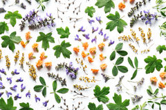Floral ρύθμιση στο άσπρο υπόβαθρο Στοκ Φωτογραφία