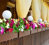 Floral ρύθμιση των λουλουδιών Στοκ Εικόνες