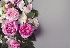 floral σειρά πλαισίων πλαισίων Αυξήθηκε λουλούδια σε ένα γκρίζο υπόβαθρο Επίπεδος βάλτε στοκ φωτογραφίες