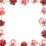 floral σειρά πλαισίων πλαισίων Στοκ Εικόνες