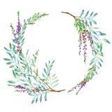 Floral στεφάνι Γιρλάντα με τους κλάδους φυστικιών και lavender τα λουλούδια διανυσματική απεικόνιση