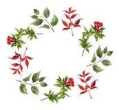Floral στεφάνι με το κόκκινα λουλούδι και τα φύλλα Στοκ Εικόνες