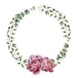 Floral στεφάνι Watercolor με τον ευκάλυπτο, τα φύλλα ευκαλύπτων μωρών και τα peony λουλούδια διανυσματική απεικόνιση