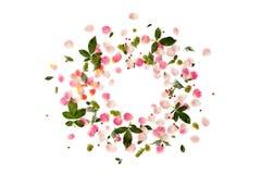 Floral στρογγυλό πλαίσιο με τα ροδαλά πέταλα και τα πράσινα φύλλα στο λευκό Στοκ Εικόνα
