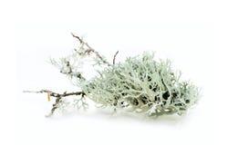 Floral συνθέσεις στοιχείων Στοκ Φωτογραφία