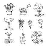 Floral συρμένο χέρι εκλεκτής ποιότητας σύνολο Τα διανυσματικά λουλούδια και τα φύλλα συλλέγουν ελεύθερη απεικόνιση δικαιώματος