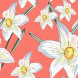 Floral σχέδιο άνοιξη ναρκίσσων daffodils άνευ ραφής Διανυσματική κίτρινη και άσπρη απεικόνιση ελεύθερη απεικόνιση δικαιώματος