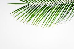 Floral σχέδιο με τα πράσινα φύλλα στο άσπρο MO άποψης υποβάθρου τοπ Στοκ Εικόνες