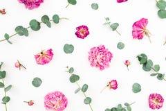 Floral σχέδιο των ρόδινων λουλουδιών και των κλάδων ευκαλύπτων στο άσπρο υπόβαθρο Επίπεδος βάλτε, τοπ άποψη Ανασκόπηση ημέρας βαλ στοκ εικόνες με δικαίωμα ελεύθερης χρήσης