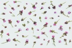 Floral σχέδιο φιαγμένο από κάρδο με τα ρόδινα και πορφυρά λουλούδια και τα αγκάθια στο άσπρο υπόβαθρο Επίπεδος βάλτε, τοπ άποψη Β Στοκ φωτογραφία με δικαίωμα ελεύθερης χρήσης