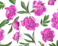 Floral σχέδιο φιαγμένο από ρόδινα peony λουλούδια και φύλλα που απομονώνονται στο άσπρο υπόβαθρο Επίπεδος βάλτε Στοκ φωτογραφία με δικαίωμα ελεύθερης χρήσης